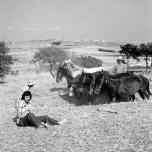 Ο Κωστάκης Αλιπράντης στο αλώνι του στην περιοχή Λαού, έξω από τη Μάρπησσα, 1972.